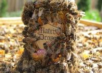 Méhek védelmében a Matrix Drops készítményekkel